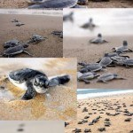Enjoy Sea Turtle Season in Puerto Vallarta